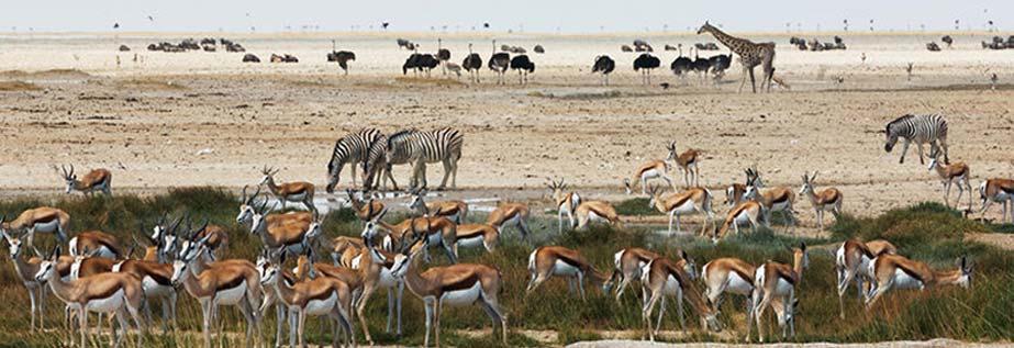 Namibia National Park Permit