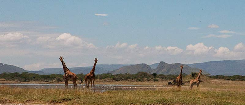 Kenya Location Soysambu Conservancy