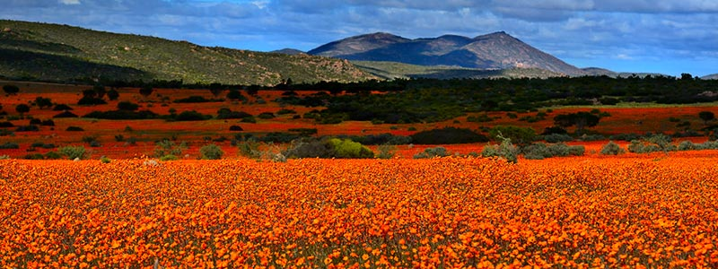 South Africa locations Namaqualand